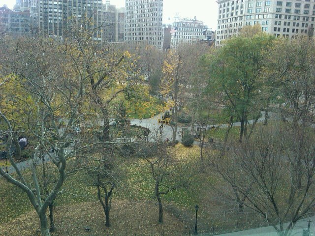 Fall in NY